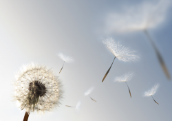 Image of a flower blowing in the wind